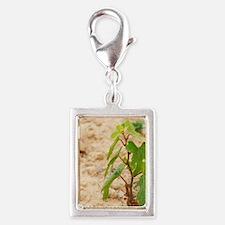 Domaine de l'Hortus. Pic St  Silver Portrait Charm