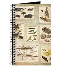 Illustrations Journal