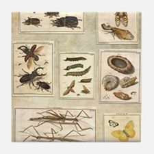 Illustrations Tile Coaster