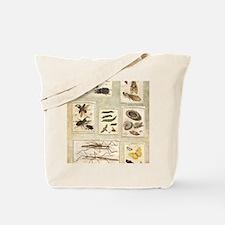 Illustrations Tote Bag