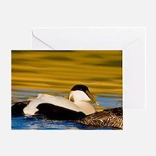 Eider pair swim in pond near Snaefel Greeting Card