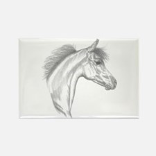 Yearling Horse Rectangle Magnet