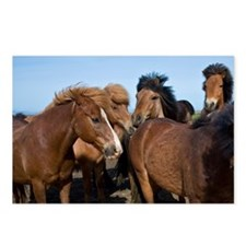Icelandic Horses in north Postcards (Package of 8)