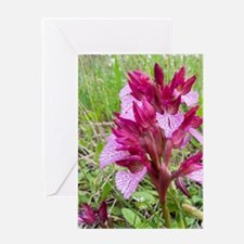 Crete. Butterfly orchid in bloom (Or Greeting Card