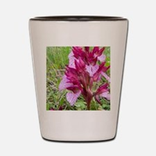 Crete. Butterfly orchid in bloom (Orchi Shot Glass