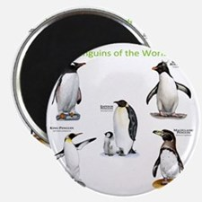 Penguins of the World Magnet