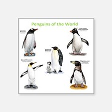 "Penguins of the World Square Sticker 3"" x 3"""