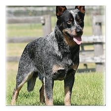 "Australian Cattle Dog 9Y Square Car Magnet 3"" x 3"""