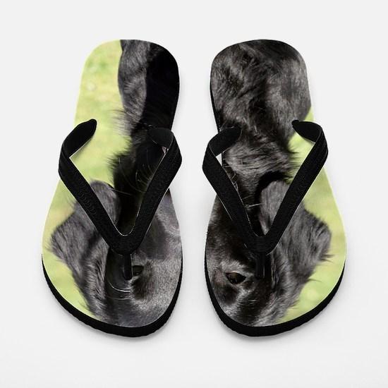 Flat Coated Retriever 9Y040D-040 Flip Flops