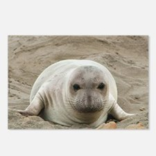 Elephant Seal Pup Postcards (Package of 8)