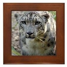 Snow Leopard 3 Framed Tile