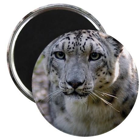 "Snow Leopard 3 2.25"" Magnet (100 pack)"