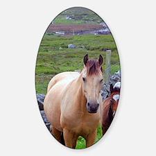 Ireland. Farm horses of the Connema Decal