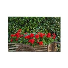 Tuscany. Red geraniums spill out  Rectangle Magnet