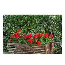 Tuscany. Red geraniums sp Postcards (Package of 8)