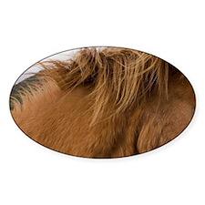 Icelandic horses, Geysir, Iceland. Decal