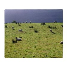 Sheep may safely graze on the green  Throw Blanket