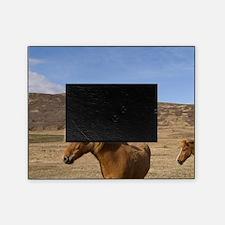 Icelandic horses, Snaefellsnes Penin Picture Frame