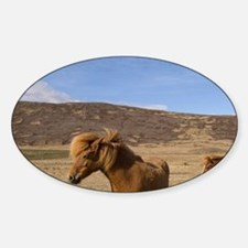 Icelandic horses, Snaefellsnes Peni Decal