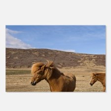 Icelandic horses, Snaefel Postcards (Package of 8)