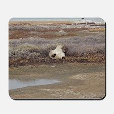 P Bear (55)10x10-gt Mousepad