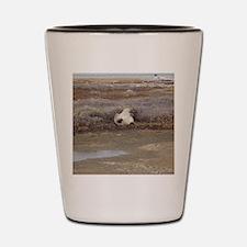 P Bear (55)10x10-gt Shot Glass