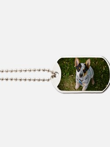 nom1 Dog Tags