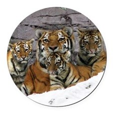 toma and cubs Round Car Magnet