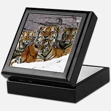 toma and cubs Keepsake Box