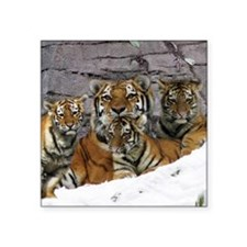 "toma and cubs Square Sticker 3"" x 3"""