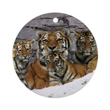 toma and cubs Round Ornament