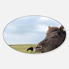 Icelandic horse (Equus scandinavicu Decal