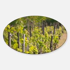 Detail of vineyardUplands, Zemplen  Sticker (Oval)