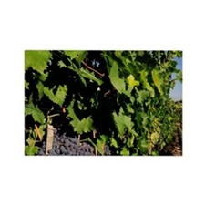 Greve. Chianti grapes from the vi Rectangle Magnet
