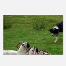 Working sheep dog. Postcards (Package of 8)