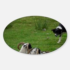 Working sheep dog. Decal