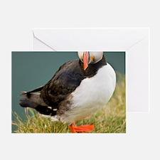 Shown here in breeding colorsc seabi Greeting Card