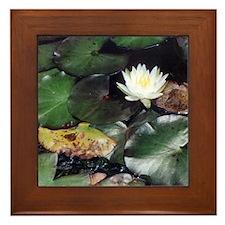 Water Lily Framed Tile