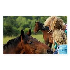 Enniskerry. Horse encounter ne Decal