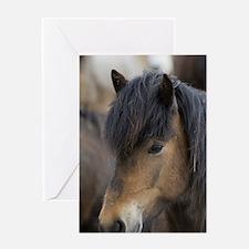 Icelandic horses, Skagafjorour Fjord Greeting Card