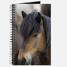 Icelandic horses, Skagafjorour Fjord, Icel Journal