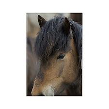 Icelandic horses, Skagafjorour Fj Rectangle Magnet