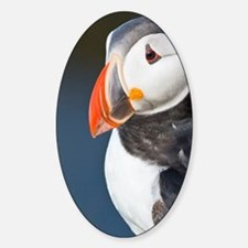 The Atlantic Puffin, a pelagic seab Sticker (Oval)
