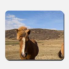 Icelandic horses, Snaefellsnes Peninsula Mousepad
