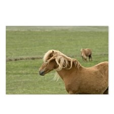 Icelandic horses, Lagarfl Postcards (Package of 8)