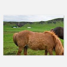 Icelandic Horses graze in Postcards (Package of 8)