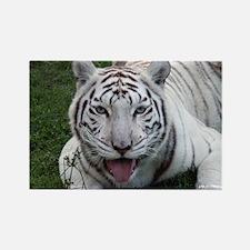 White Tiger 2 Rectangle Magnet