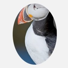 The Atlantic Puffin, a pelagic seabi Oval Ornament