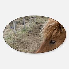 Icelandic horses, Skagafjorour Fjor Sticker (Oval)