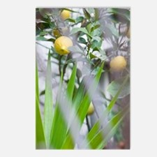 CAPRI: Garden Detail / Vi Postcards (Package of 8)